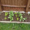 Grow Your Own Kit Early May